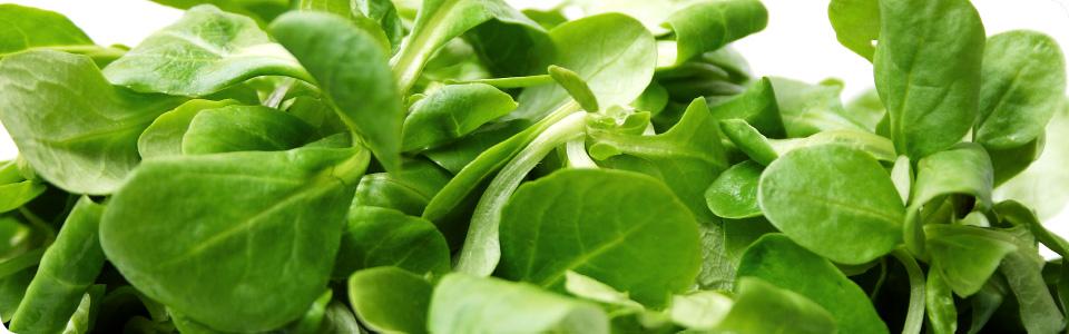 Nur frische Zutaten zu besten Speisen und Säfte verarbeiten